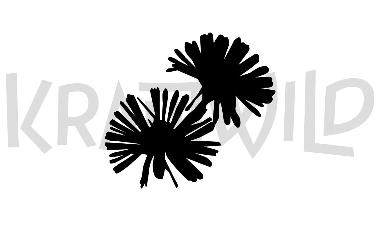 krautwild-bellis-5-1280x768
