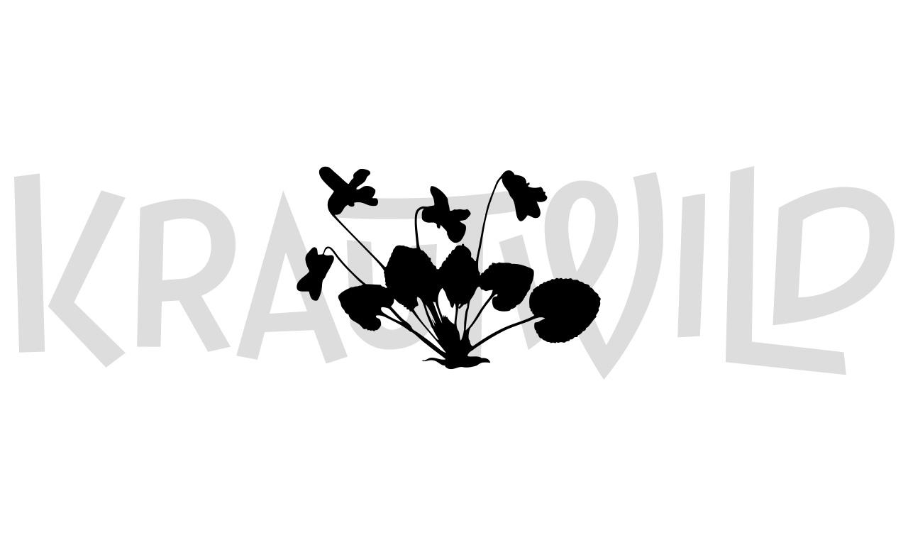 krautwild-viola-5-1280x768