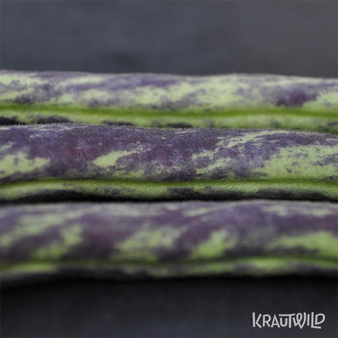 krautwild-bohnen_phaseolus-1