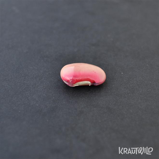 krautwild-bohnen_phaseolus-2