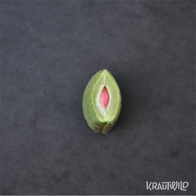 krautwild-bohnen_phaseolus-8